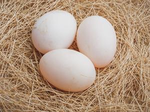 ÖRDEK Yumurtası...